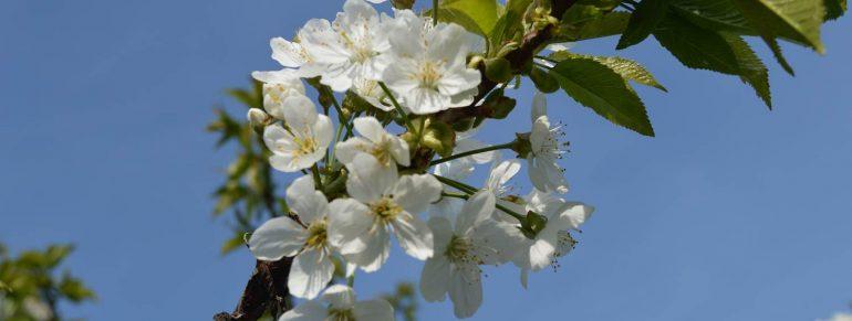 Der Frühling ist bei uns angekommen…