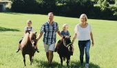 Unsere Ponys freuen sich über Bewegung