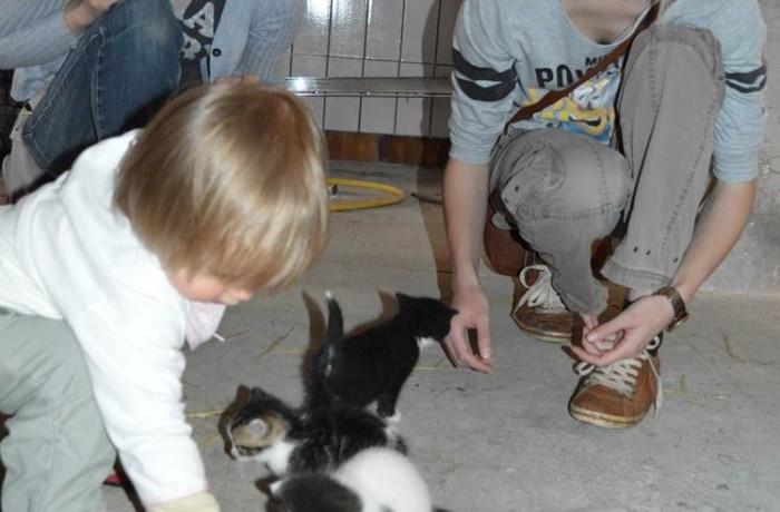 Die kleinen Katzen genießen es, verwöhnt zu werden