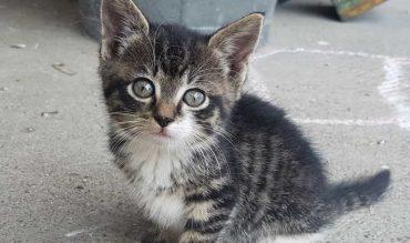 Wir haben eine kleine Katze