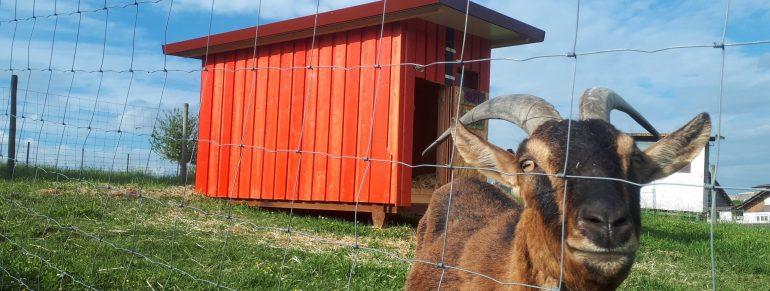 Neue Ziegenhütte