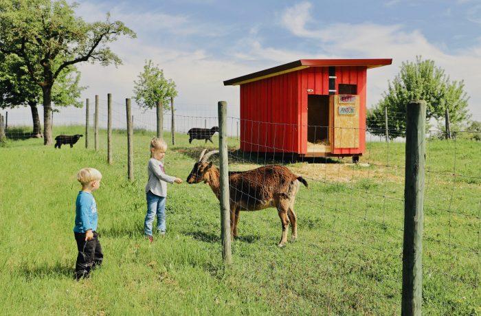 Unsere Ziegen sind für Fressen immer zu haben