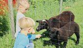 Unsere Schafe freuen sich über Besuch