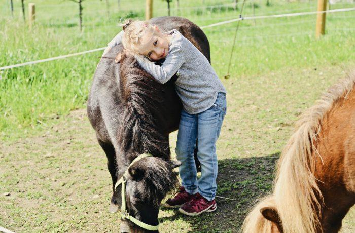 Unsere Ponys lieben Streicheleinheiten