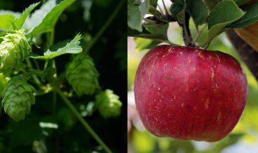 Herbstzeit – Erntezeit